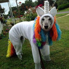 greyhound Unicorn costume. Other items available: Custom made Greyhound : Coats, Pajamas, Costumes, Wedding attire, Rain Coats, Reflective vests