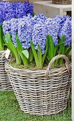 Front door flower pots ideas are the best way to show your love of plants if you have little or no lawn for a garden. Obviously, there many other designs, ideas and also mixes you can attempt so locate the one that better matches you as well as your house. See the very best ideas and also designs for 2018! #frontdoorflowerpots #frontdoor #frontdoordecor