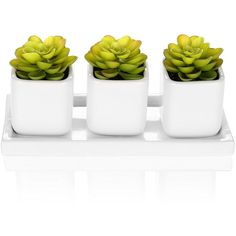 Amazon.com: Set of 3 Green Artifical Succulent Plants in White Modern... ($19) ❤ liked on Polyvore featuring home, home decor, white pot, white home decor, white tray, ceramic home decor and ceramic pots