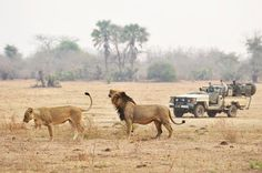 Zambezi River Lodge | Best Safari Camp in Africa | Lodge Zambia