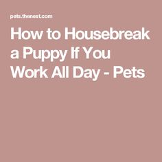 How to Housebreak a Puppy If You Work All Day - Pets