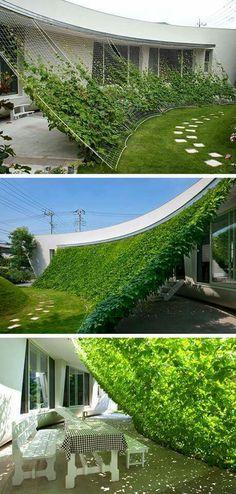 Need shade? Make a vining plant arbor.