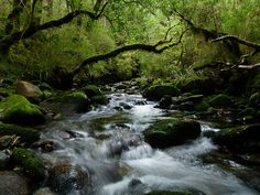 Rahu River, Victoria Forest Park NZ by New Zealand Wild, via Flickr