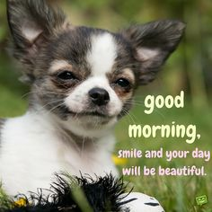 Good Morning, smile and your day will be beautiful.