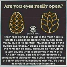 Have you ever had a third-eye awakening? Spiritual Enlightenment, Spiritual Wisdom, Spiritual Awakening, Spiritual Growth, Cultures Du Monde, Mudras, Psychic Development, Personal Development, Pineal Gland