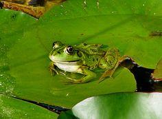 Luxury Frosch im Botanischer Garten Freiburg Germany