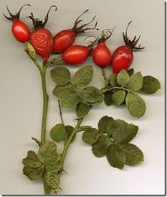 Recipes for Candied Rose Hips and Rose Hip Catsup from Comfrey Cottages blog