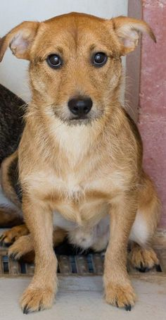 SL 10/7/15.      06/29/15-GUY needs a home! Terrier Mix • Young • Male • Small Alpine Humane Society Alpine, TX