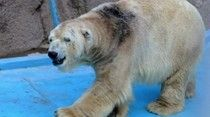 "Argentine Zoo Refuses To Relocate ""World's Saddest Animal,"" Despite 600,000 Signatures"