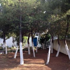 A house with pine trees, Spetses Island