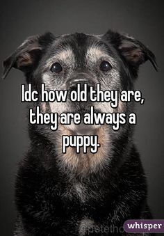 Idc how old they are, they are always a puppy.