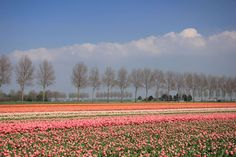 Holland, Netherlands - studioportosabbia/Getty Images