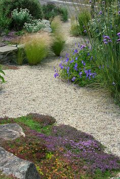 [Ideas to soften the edges of my gravel garden.  Note grass planted out into the gravel.]  ... this looks amazing