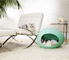 Modern pet furniture - egg shaped pet bed, private, trendy and most important, easy for cleaning Cool Cat Beds, Niche Chat, Modern Dog Houses, Cat Houses, Tree Houses, Small Dog House, Decoration Originale, Pet Furniture, Furniture Design