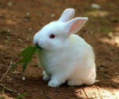 sweet a white rubbit