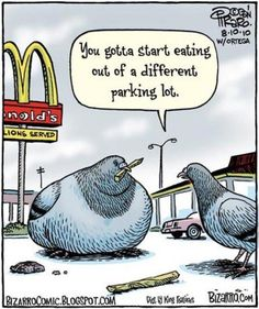 Pigeon eating too much Macdonalds! Brilliant!