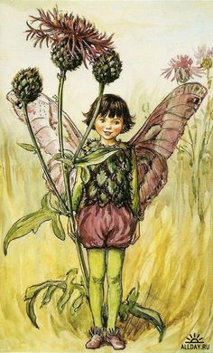 """Vintage print 'The Greater Knapweed Fairy' by Cicely Mary Barker from """"The Book of the Flower Fairies""""; Poem and Pictures by Cicely Mary Barker, Published by Blackie & Son Limited, London [Flower Fairies - Summer] Cicely Mary Barker, Flower Fairies Books, Fairy Pictures, Vintage Fairies, Vintage Roses, Fantasy Illustration, Fairy Art, Illustrations, Vintage Prints"""