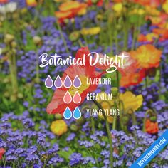 The ultimate essential oil blend software! Create your aromatherapy blends or search through our extensive list. Easily find what blends you can make based on the oils you have. Essential Oil Diffuser Blends, Essential Oil Uses, Young Living Essential Oils, Doterra Diffuser, Geranium Essential Oil, Cedarwood Oil, Doterra Essential Oils, Yl Oils, Wells