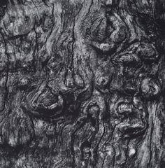 Apple Tree, Millerton 2