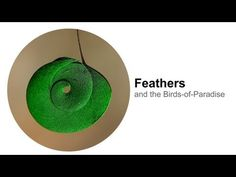Feathers: and the Birds-of-Paradise