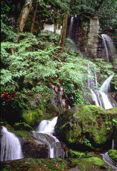 Place of a Thousand Drips - on the  Roaring Fork Motor Nature Trail (Great  Smoky Mountain National Park, TN)