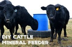 Make your own mineral feeder for your animals using an old tire and 55 gallon drum!