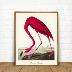 Flamingo Printable, Pink Flamingo Wall Art American Flamingo Print john James Audubon Beach House Decor Coastal Art Flamingo Poster 3 COLORS