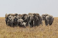 Transpórtate a Kenia Con Estas Increíbles Imágenes