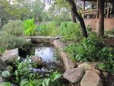 Backyard miniature pond