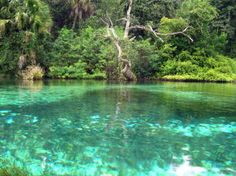Rainbow River, Florida   We took our Kayaks down the Rainbow River, it was so clear and neat to row along side the turtles