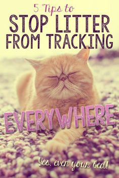 '5 Tips to Stop Litter from Tracking Everwhere...!' (via eBay)