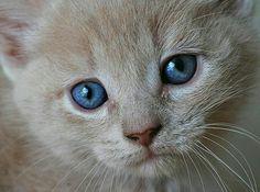 Des yeux magnifiques