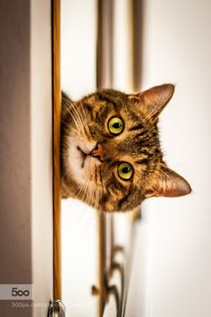 Who's there? by KoCTuK. Please Like http://fb.me/go4photos and Follow @go4fotos Thank You. :-)