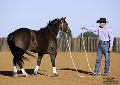 Groundwork Exercise #8: Outback Exercise Goal: To be able to back the horse away from you in a perfectly straight line without ever having to move your feet. Then you should be able to draw him back up to you by gently combing the lead rope through your hand. More about the exercise: https://www.downunderhorsemanship.com/Store/Product/MEDIA/D/253/