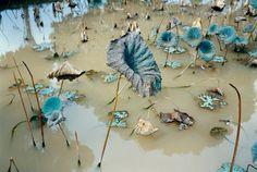 Lotus Pond, Ha Son Binh Province, Vietnam 1993 by Mitch Epstein