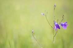 Summer flowers #8 by Lagunova_Maya on Creative Market