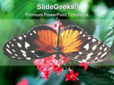 Amazing Close Up Butterfly Animals PowerPoint Templates And PowerPoint Backgrounds 0111 #PowerPoint #Templates #Themes #Background