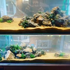 Création Aqua-Clean Aquariums, Freshwater Aquarium, Tanked Aquariums, Fish Tanks