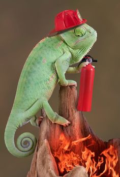 Chameleon. At least he's prepared for the worst.