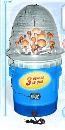 Spores Mushroom Spores Grow Kits mushroom spores syringes psilocybe mushrooms syringes edible mushroom prints or spore syringes or mushroom grow kits > MycoGarden Mushroom Growing System Edible Mushrooms, Stuffed Mushrooms, How To Grow Shrooms, Growing Psychedelic Mushrooms, Growing Mushrooms At Home, Psilocybin Mushroom, Mushroom Grow Kit, Mushroom Spores, Organic Protein