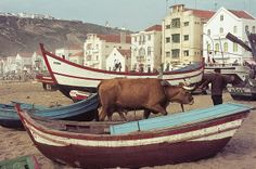 vintage everyday: Color Photos of Life in Portugal, 1972