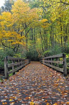 Take a fall hike on Horace Kephart Trail in the Great Smoky Mountains National Park, Bryson City, North Carolina