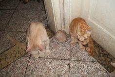 Nenen 1 (vulgo Russinho) e Nenen 2 (vulgo Pimpinha) - 9 meses