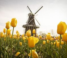 Two-day itinerary to Holland! Details: http://www.midwestliving.com/travel/michigan/holland/weekend-getaway-in-holland-michigan/