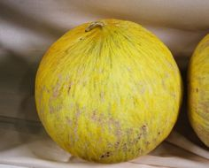 Golden Beauty Casaba Melon
