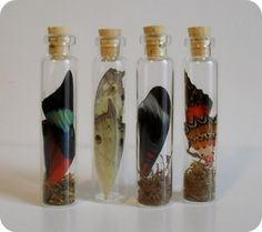 Butterfly wings in tiny apothecary jars. I freaking love this. Of course. :)