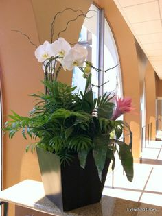 Orchids and bromeliads can make a nice combination for a high-profile color bowl as one of our clients chose in this photo, complemented with a neanthe bella palm plant.