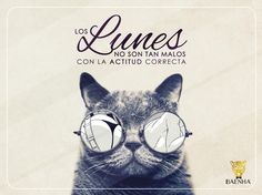 #Lunes #gato #actitud