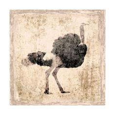 Marmont Hill The Ostrich Irena Orlov Painting Print on Canvas 32 x 32 ($190) ❤ liked on Polyvore featuring home, home decor, wall art, canvas art, wall decor, canvas wall art, wildlife paintings, canvas paintings, wildlife home decor and canvas home decor