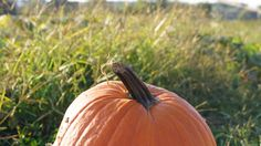 Visiting a Pumpkin Patch in the fall to pick your own pumpkin. Not to mention the tons of endless photo possibilities for couples, families, or single shots.
